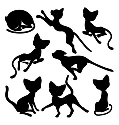 Eight silhouettes of funny cats vector