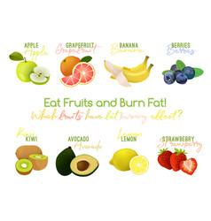 fat burning fruits vector image