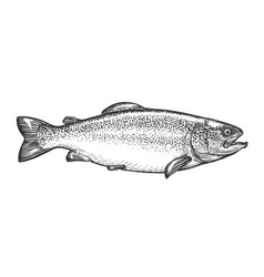 sketch trout in vintage engraving style hand vector image