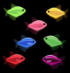 colorful fish on black background vector image