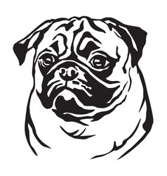 decorative portrait of dog pug vector image