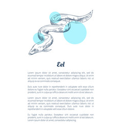 Eel marine creature hand drawn poster with text vector