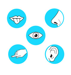 five senses methods of perception taste sight vector image
