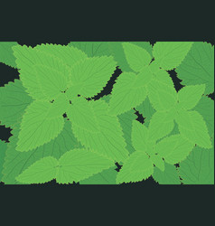 Stinging nettle background herbal medicine vector