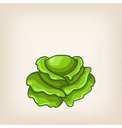 Cute green hand drawn cabbage vector image vector image