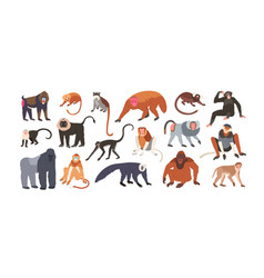 Collection cute funny exotic monkeys and apes vector