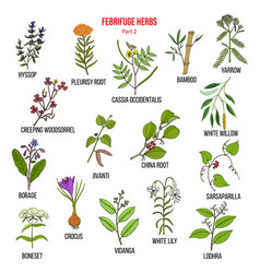 febrifuge herbs collection part 2 vector image