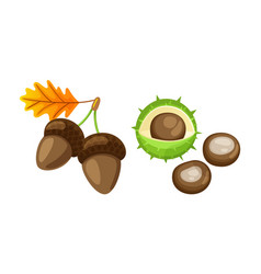 leaf with pair of acorns and chestnut set vector image