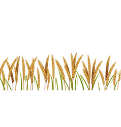 realistic wheat cereals agriculture horizontal vector image