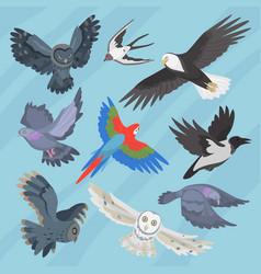 different flying birds breed species race strain vector image vector image