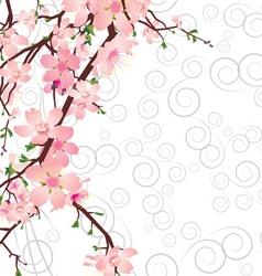 vector sakura branch on ornate background vector image vector image