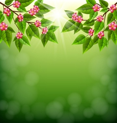 Branches with flowers on a green background vector