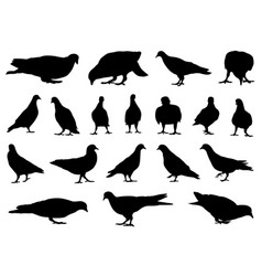 different doves vector image