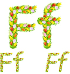 font type letter F made from flower tulip vector image