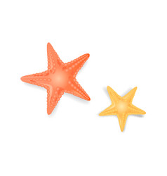 starfish sea stars closeup icon vector image
