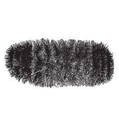 Woolly bear caterpillar vintage vector