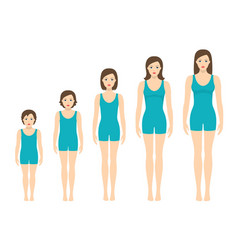 womens body proportions changing with age vector image