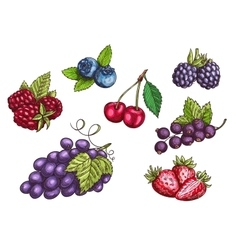 Berries fruits set color sketches vector image