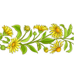 Arnica plant pattern on white background vector