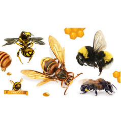 Bee bumblebee wasp hornet 3d realistic icon set vector