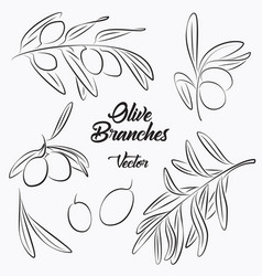 black olives and olives branches vector image