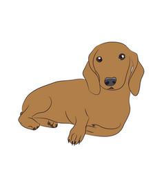 Dog lies dachshund brown vector