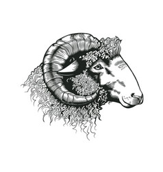 Head ram hand drawn in antique etching style vector