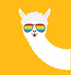 llama alpaca animal face in rainbow glassess cute vector image