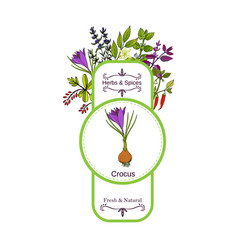 Vintage herbs and spices label collection crocus vector