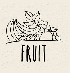 fruit fresh natural food nutrition healthy doodle vector image