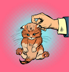 hand kitten holds by the scruff vector image