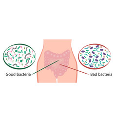Intestinal bacteria flora good and bad bacteria vector