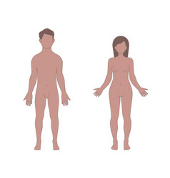 Male and female human body shapes vector