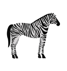 Zebra wild animal vector