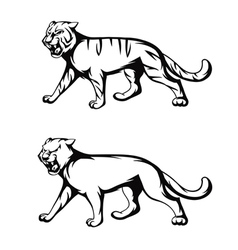 tiger and panther vector image