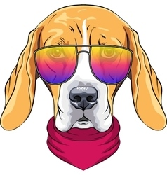 hipster serious dog Beagle in glasses vector image vector image
