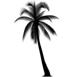 coconus vector image
