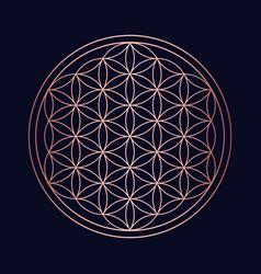Sacred geometry copper mandala circle design vector