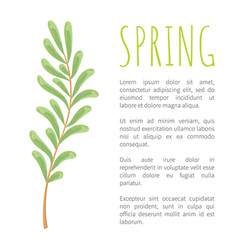 Spring and twig with tiny oblong leaves poster vector