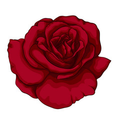 beautiful red rose with effect watercolor vector image