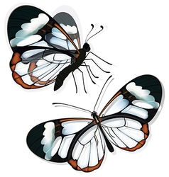 Butterfly with transparent wings vector image