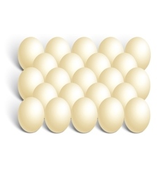 chicken eggs on white background vector image