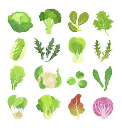 leafy vegetables set agriculture and green plant vector image