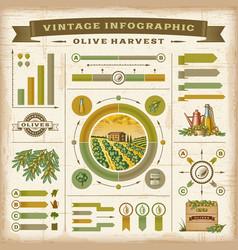 Vintage olive harvest infographic set vector image vector image
