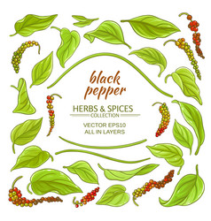 black ground pepper elements set vector image