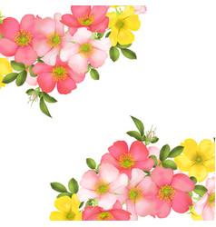 dog-rose blooms wild rose vector image