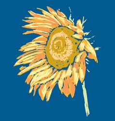 Sketch ripe sunflower inflorescence vector