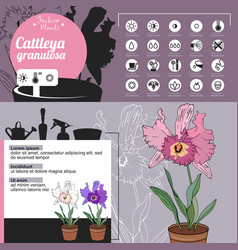 template for indoor plant cattleya tipical vector image