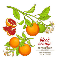blood orange set vector image