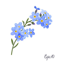 Branch of blue forget-me-not flowers vector